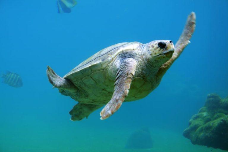 Turtle Beach Karachi