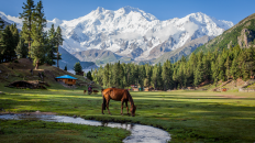 Fairy Meadows Pakistan